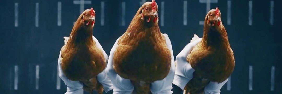 танцюючі кури